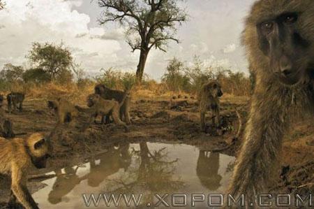 Амьтдын ертөнц-2007 [74 фото]