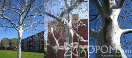 Шведийн Flogsta хотын моддыг төөлүүр хорхой сүйтгэжээ