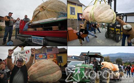 Хамгийн том хулууны тэмцээнд 750 кг жинтэй хулуу тэргүүн байр эзэлжээ