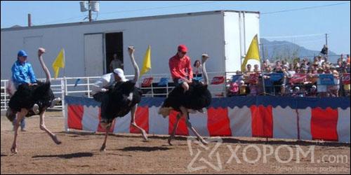 Аризонад жил бүр Ostrich Festival буюу тэмээн хяруулын баяр болдог [11 фото]