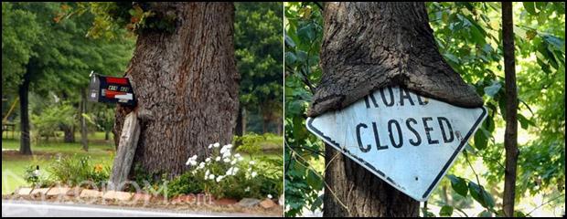 Амьд биетийн нэг хэсэг болсон хүний гараар бүтээгдсэн эд юмс буюу идэмхий модод