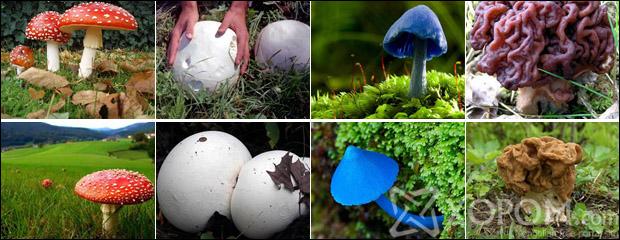 Байгаль эхийн өвөрмөц бүтээлүүдийн нэг бол мөөг