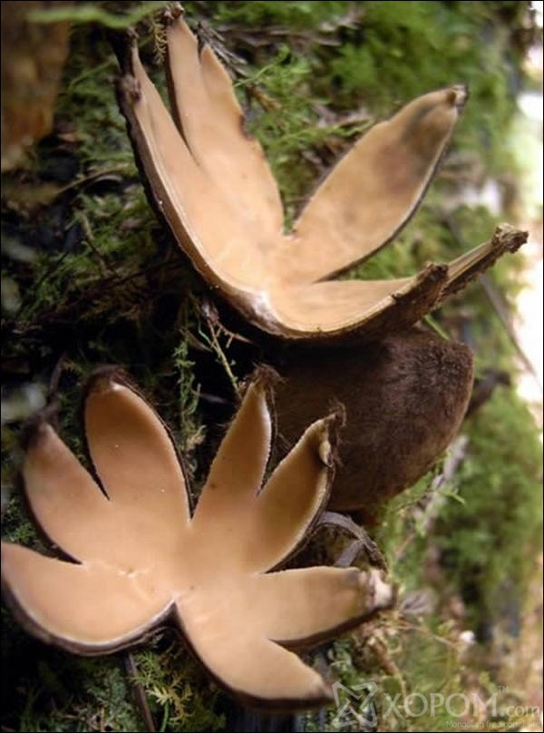 Mushroom Shaped Nature Creativity