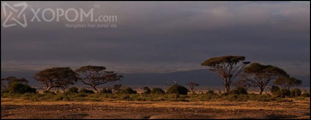 Фото аялал #3 - Онгон зэрлэг байгалиар өлгийдүүлсэн Кени улс [41 зураг]