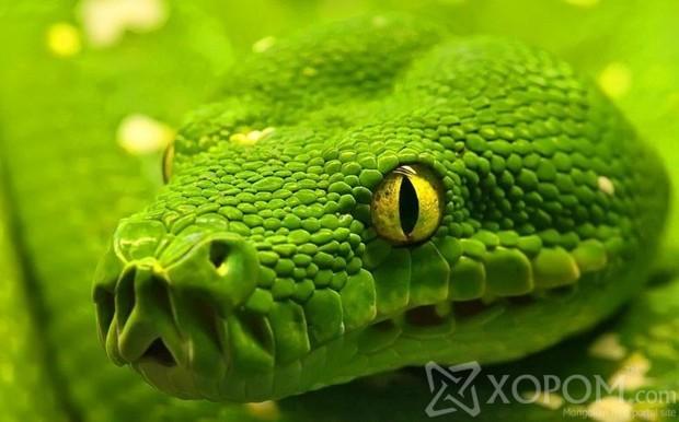 Змеи YgJfV